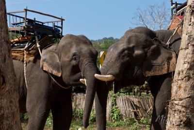 Elephant Camp Chiang Rai