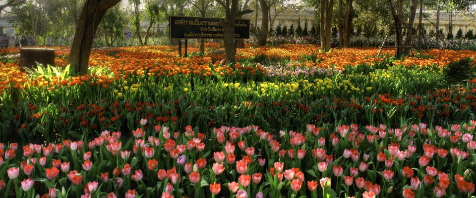 Chiang Rai Flowerfestival December - January