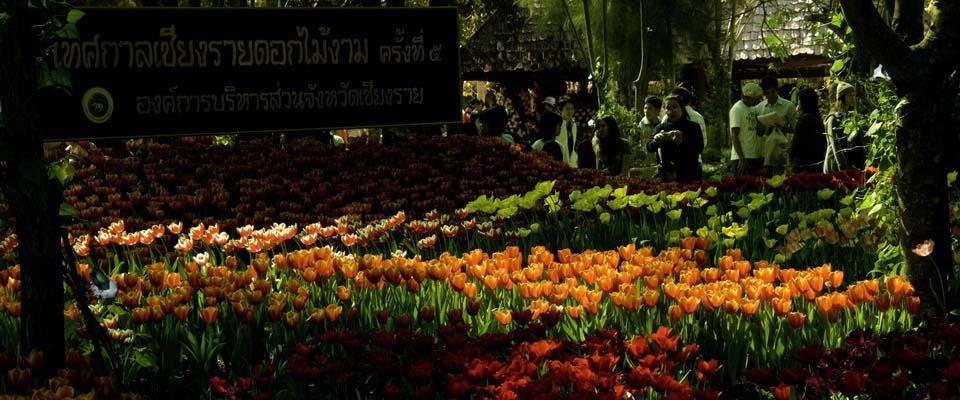Flowerfestival every year December - January